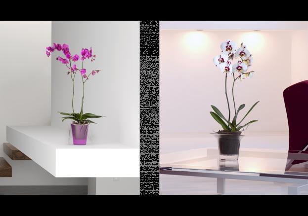 Dicas de orquídeas
