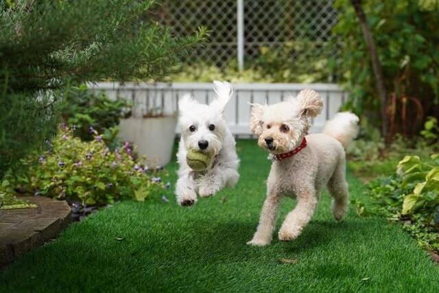 cachorros na grama sintetica